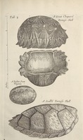 Musaeum Regalis Societatis, or A catalogue & description of the natural and artificial rarities belonging to the Royal Society and preserved at Gresham Colledge (Page 24)