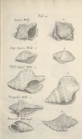 Musaeum Regalis Societatis, or A catalogue & description of the natural and artificial rarities belonging to the Royal Society and preserved at Gresham Colledge (Page 38)