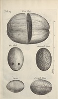 Musaeum Regalis Societatis, or A catalogue & description of the natural and artificial rarities belonging to the Royal Society and preserved at Gresham Colledge (Page 48)