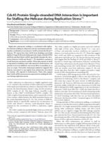 Cdc45 protein-single-stranded DNA interaction is important for stalling the helicase during replication stress.