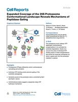 Expanded Coverage Of The 26s Proteasome Conformational Landscape Reveals Mechanisms Of Peptidase Gating