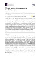 Nadph Oxidases And Mitochondria In Vascular Senescence