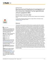 Biochemical and biophysical investigations of the interaction between human glucokinase and pro-apoptotic BAD.