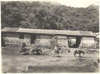 China. Farmhouse building with donkey train