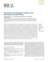 Quantitative Morphological Variation in the Developing  Wing.
