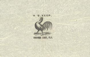 Illustration of crowing rooster, B. B. Keep, Orange Lake, Florida