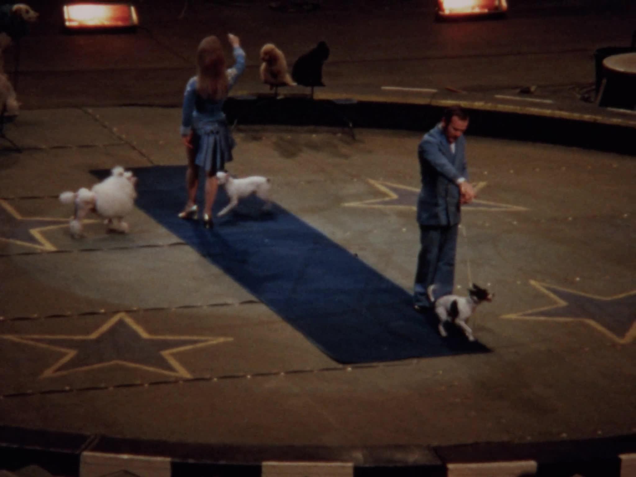 Liberty Horses, Three Ring Display, Stephenson Dog Act, Ring 3