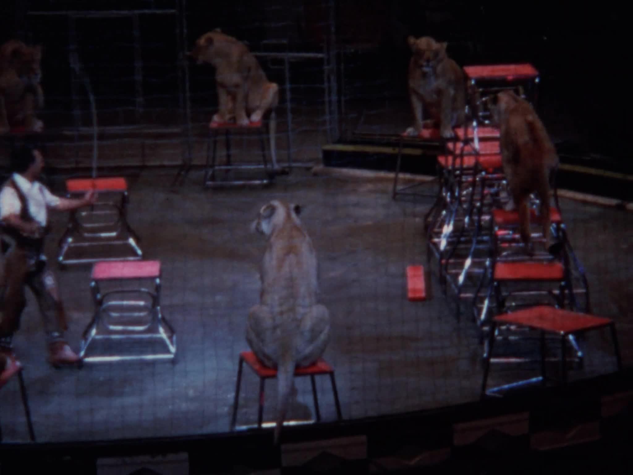 Pablo Noel Lion Act Part I