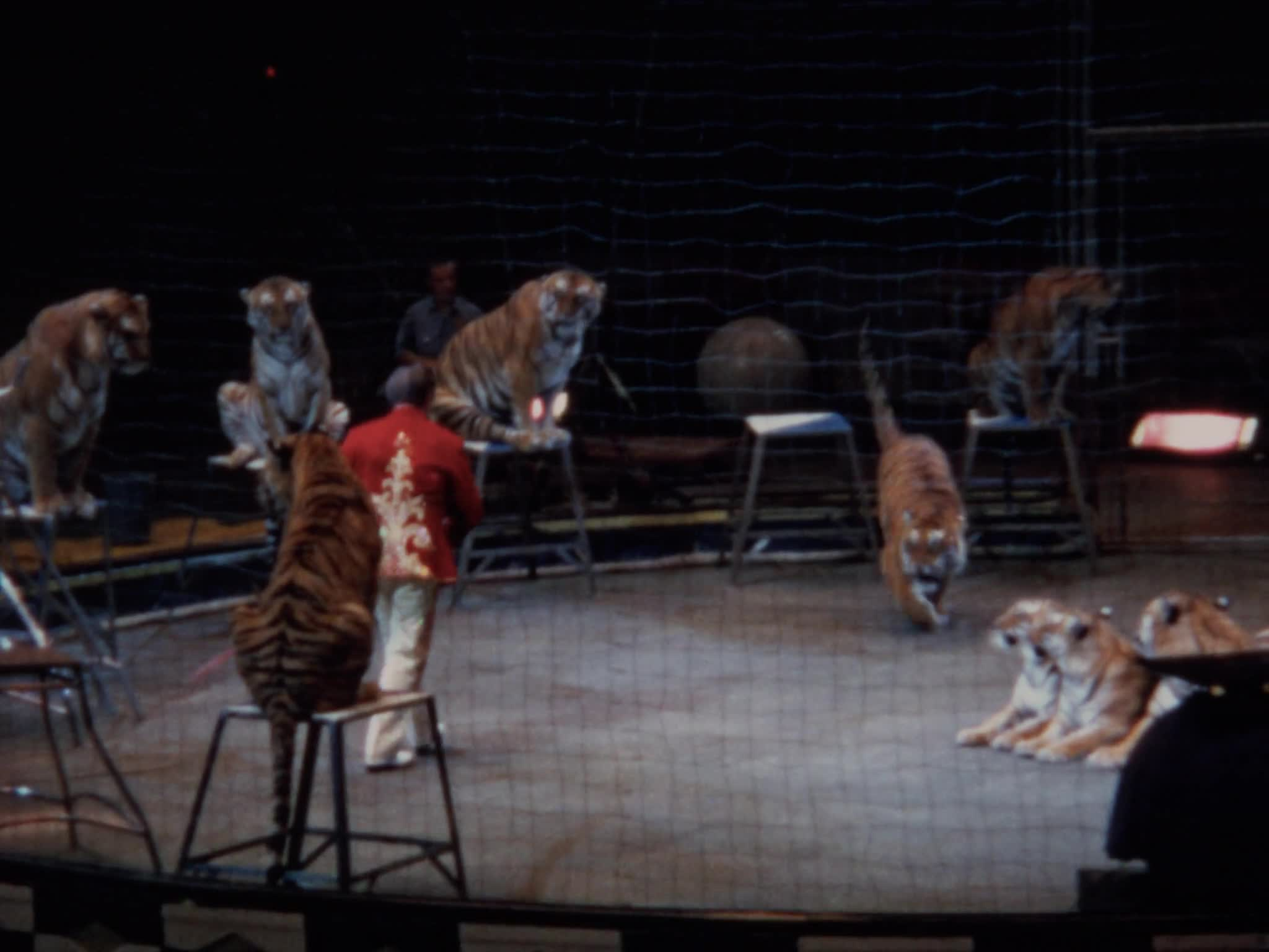 Charly Baumann Cat Act