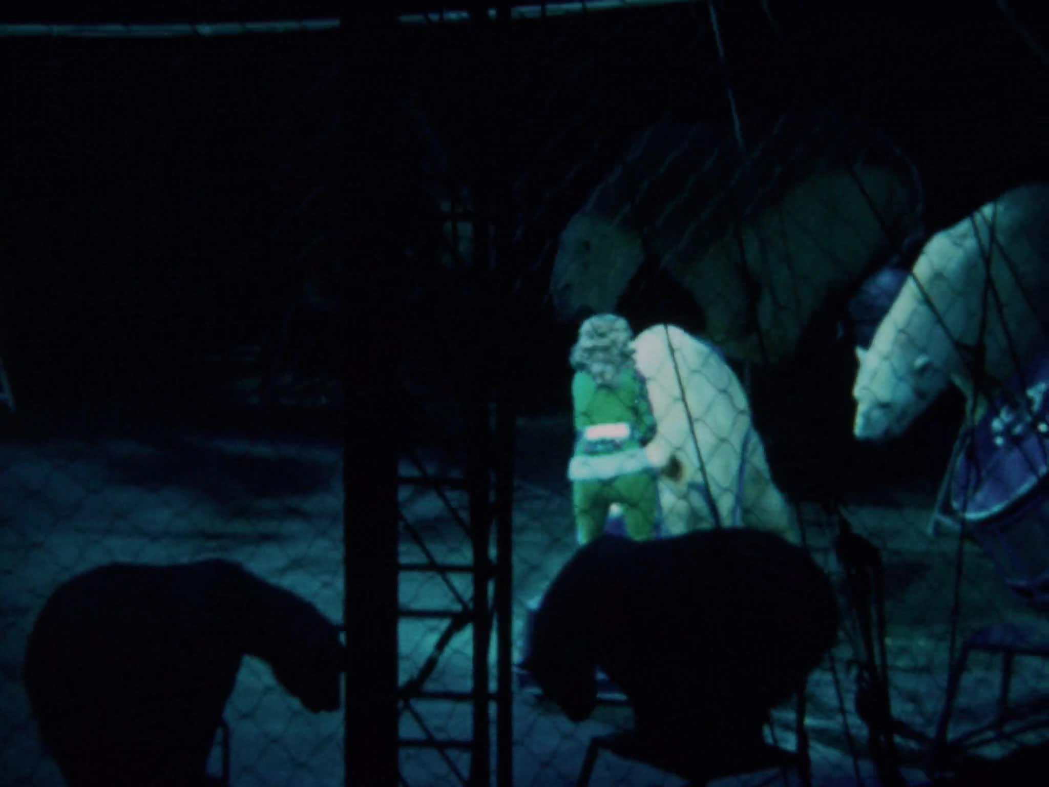 German Polar Bear Act