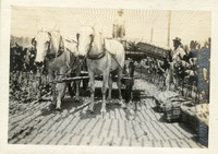 Loading Tobacco Leaves in Dade City