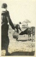 Woman Petting a Cow