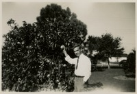 Sam Lamar Picking Fruit