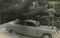 Bill Smith's Car Crushed by an Oak at Westcott