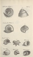 Musaeum Regalis Societatis, or A catalogue & description of the natural and artificial rarities belonging to the Royal Society and preserved at Gresham Colledge (Page 40)