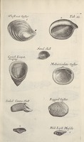 Musaeum Regalis Societatis, or A catalogue & description of the natural and artificial rarities belonging to the Royal Society and preserved at Gresham Colledge (Page 42)