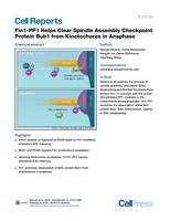 Fin1-PP1 Helps Clear Spindle Assembly Checkpoint Protein Bub1 from Kinetochores in Anaphase