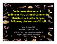 Preliminary Assessment of Sediment Macrofaunal Community Structure in Desoto Canyon, Following the Horizon Oil Spill