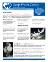 Deep-Water Corals in the Gulf of Mexico: A Deep-C Consortium Fact Sheet