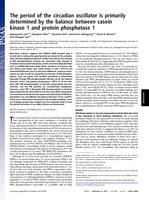 period of the circadian oscillator is primarily determined by the balance between casein kinase 1 and protein phosphatase 1.
