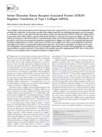 Serine-threonine kinase receptor-associated protein (STRAP) regulates translation of type I collagen mRNAs.