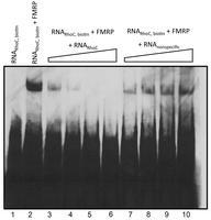 Proteomic analyses - figure 8