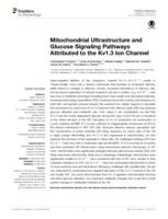 Mitochondrial Ultrastructure and Glucose Signaling Pathways Attributed to the Kv1.3 Ion Channel.