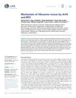 Mechanism of ribosome rescue by ArfA and RF2.
