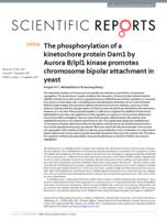 phosphorylation of a kinetochore protein Dam1 by Aurora B/Ipl1 kinase promotes chromosome bipolar attachment in yeast.