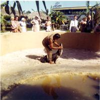 Alligator trainer performing with alligator