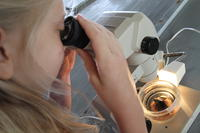 Unknown girl looking at sea urchin under microscope