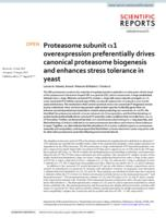 Proteasome Subunit Alpha 1 Overexpression Preferentially Drives Canonical Proteasome Biogenesis And Enhances Stress Tolerance In Yeast
