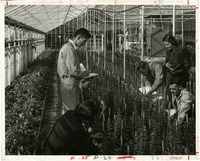 Students Taking Notes in a Greenhouse