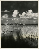 Everglade Marsh